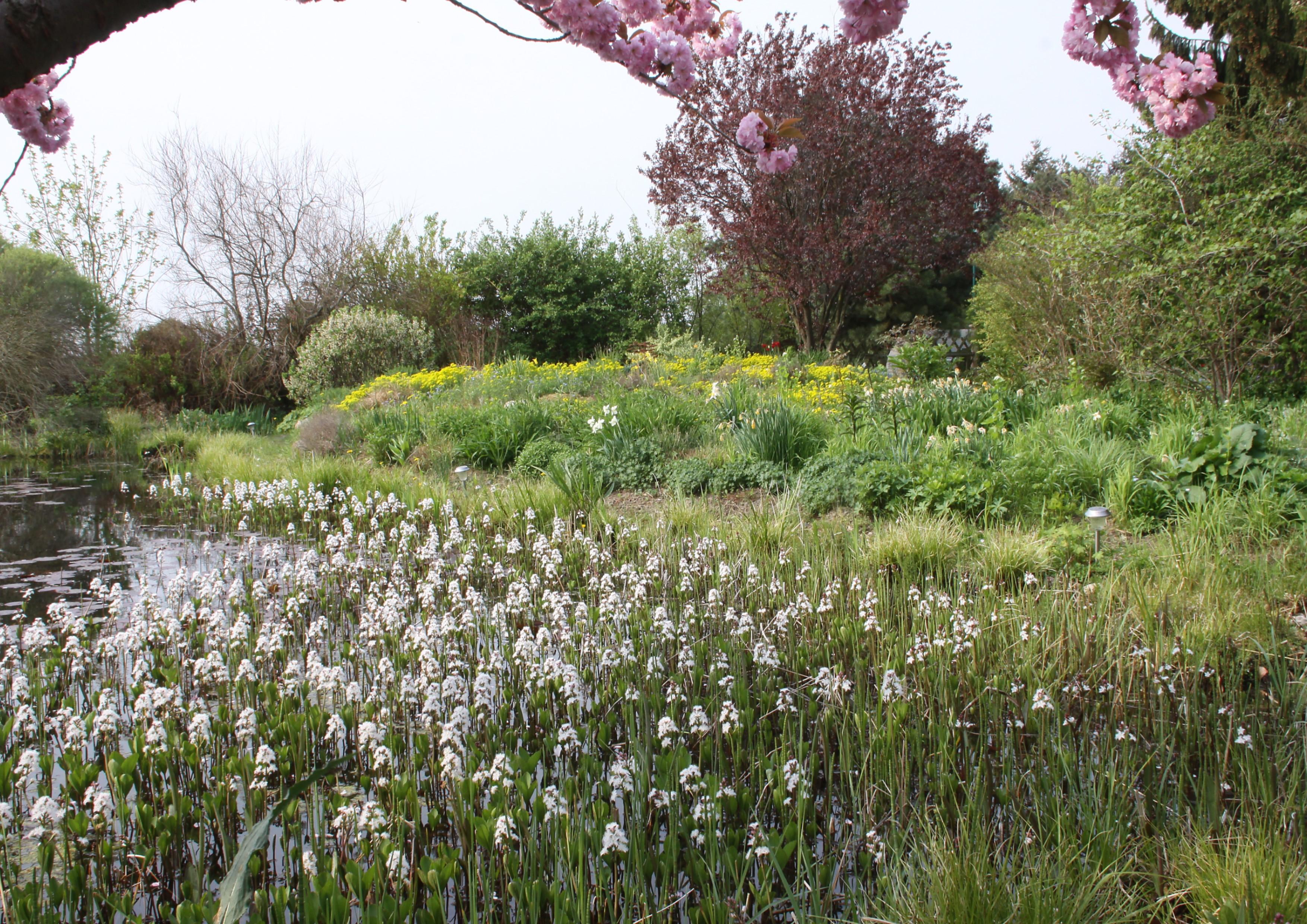 Frisch Wasser Garten Schema