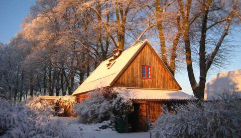 fh-rohrdommel-im-winter