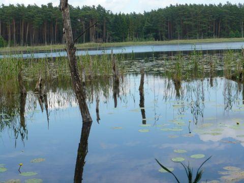 Hofsee in Federow