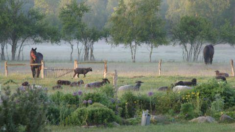 Viehweide Zarwitzer Hütte