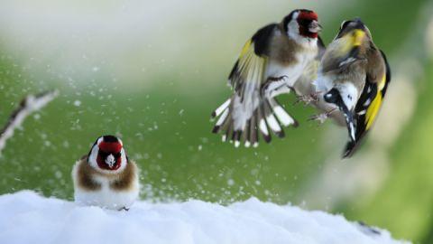 Drei Freund im Schnee