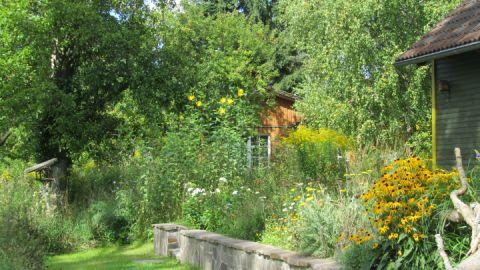 """Terrasse vom Weidenhaus - eingewachsen in """"wilder"""" Natur"""