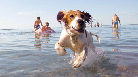 Müritzurlaub mit Hund