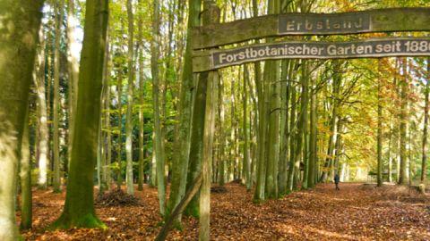 Eingang Forstbotanischer Garten Erbsland