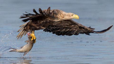 Natur erleben - Seeadler