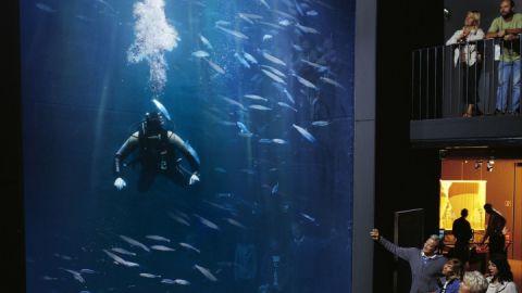aquarium_1287408943_35