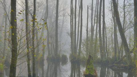 Neue Ausstellung des Naturfotografen Roman Vitt in Serrahn