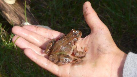 Froschkonzert