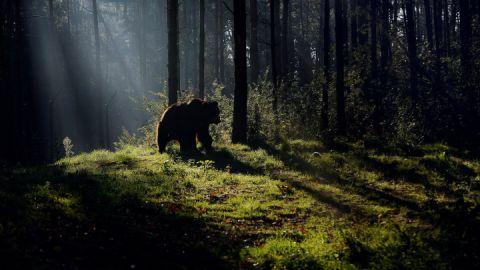 Spazieren Sie durch den BÄRENWALD Müritz und entdecken die Bären.