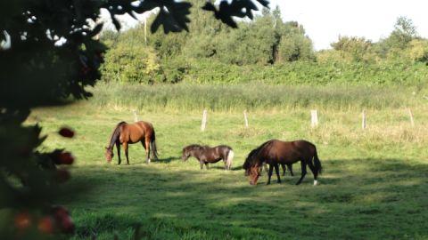 Reiten in Vorpommern - immer ein Erlebnis