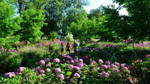 Im Sommer bezaubert die Besucher das Hortensienparadies