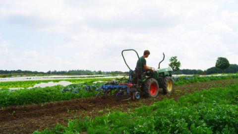 SCHLOSS eigene Landwirtschaft