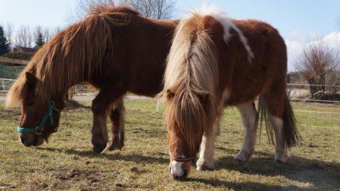 Die zwei Ponys