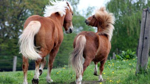 Pferde_Prangendorf