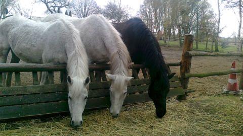 Pferdefamilie_in_der_Trebeloase
