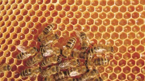 Schau-Imkerei und Bienenmuseum Neumann