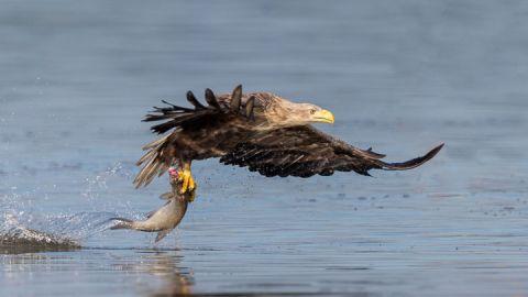 Seeadler - Erlebe Wildnis e. K.