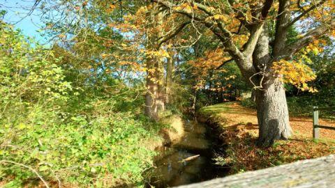 Köthelscher Bach Richtung Stadtpark