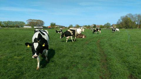 Im Sommer gehen unsere Kühe täglich auf die Weide.