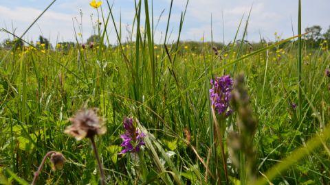 Der Park ist komplett auf Stegen begehbar um die Vielfalt der Wiesenpflanzen nicht zu zerstören