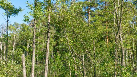 Blick auf den Moorsteg auf der Wandertour der lange Weg zum Urwald
