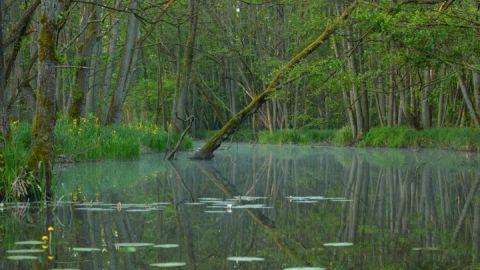 Nationalpark Wanderung Goldenbaum