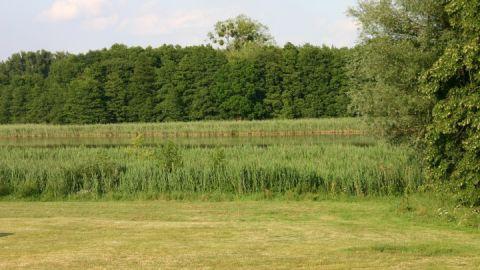 Liegewiese am Hofsee in Federow