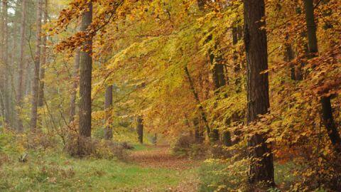 Müritz-Nationalpark-Wanderweg