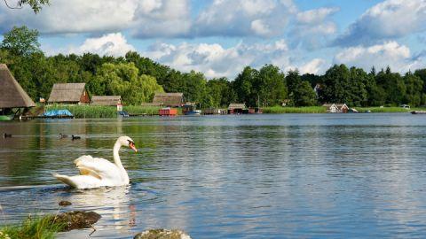 Schwan auf dem Stadtsee in Krakow am See, Mecklenburgische Seenplatte